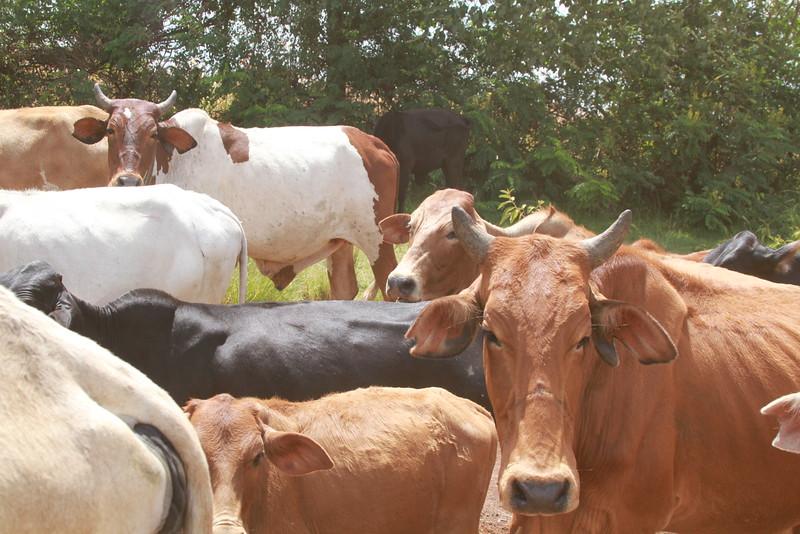 Kenya Part1 '15 2704.JPG