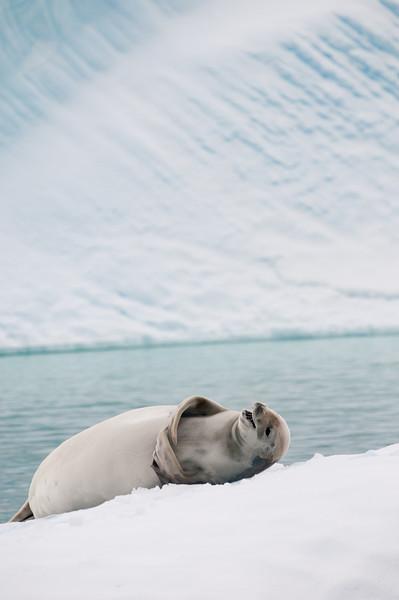 Antarctica 2015 (42 of 99).jpg