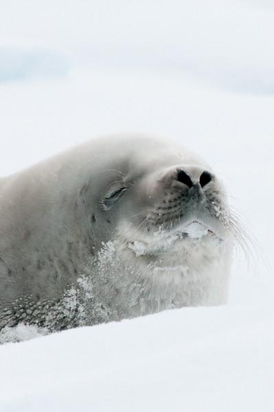 Antarctica 2015 (32 of 99).jpg