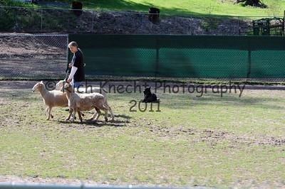Friday H/T Sheep