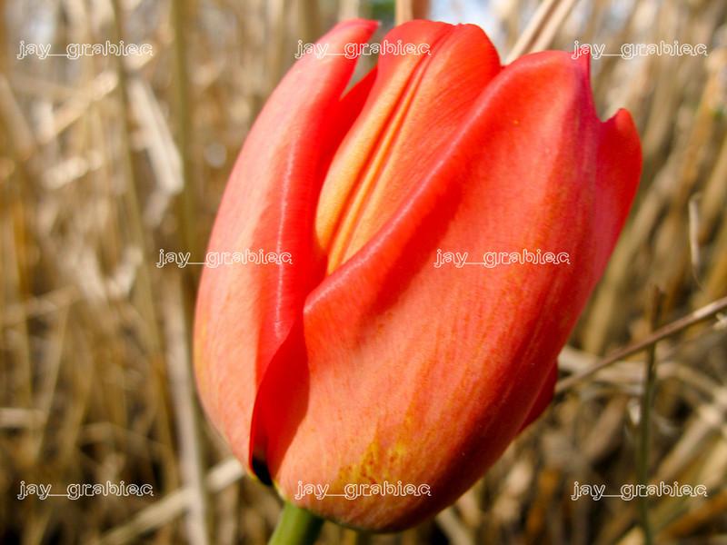 20100407_Flowers01.JPG