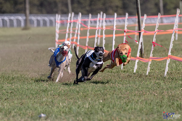 Part 2 of the 2018 Whippet NOTRA National