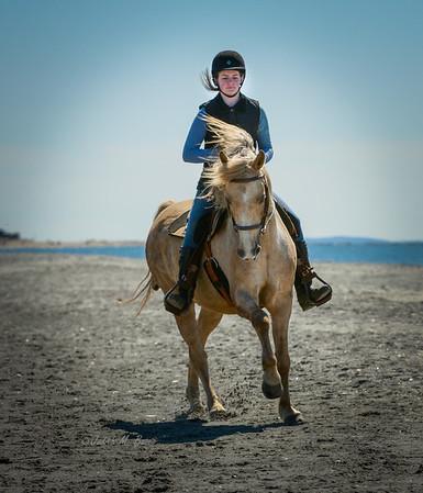 Ct. Morgan Horse @ Hammonasset 3/31/18