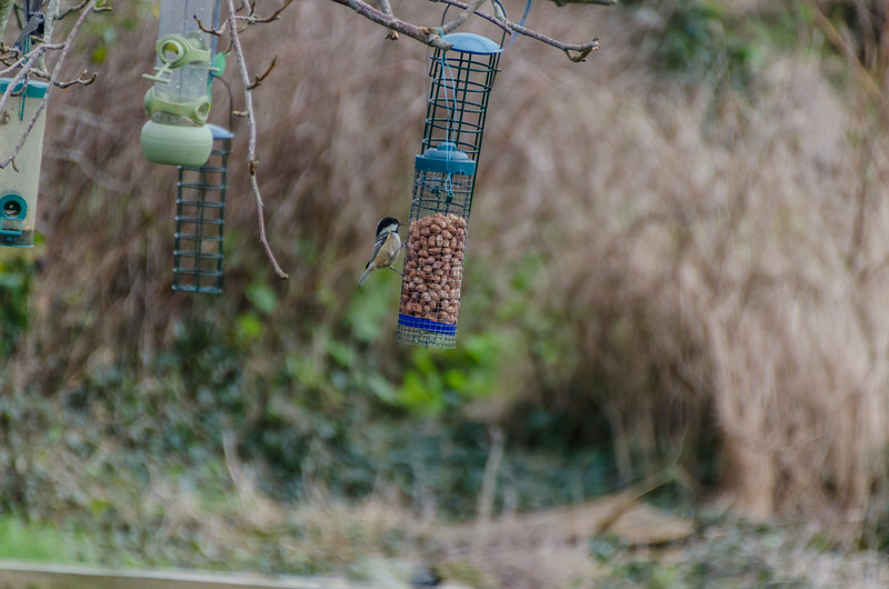 Birds 270118-2.jpg