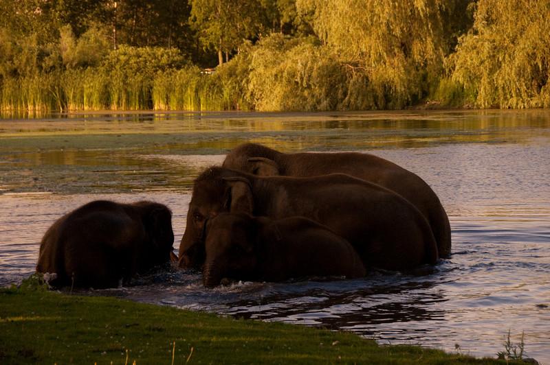african safari Park-Canada-28.jpg