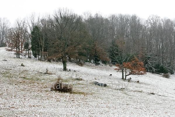 Snow 12-21-2012