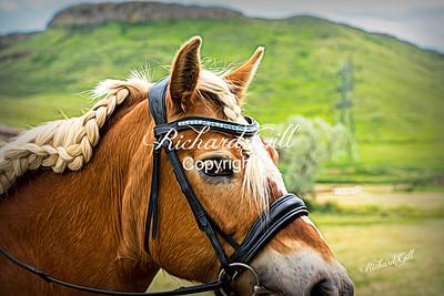 Pony 574