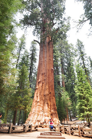 Sequoia National Park, CA‎
