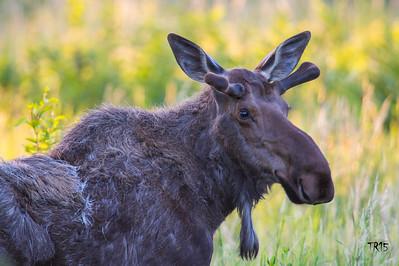 Some Alaska Wildlife