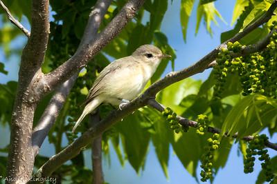 20210601 Breeding Bird Count