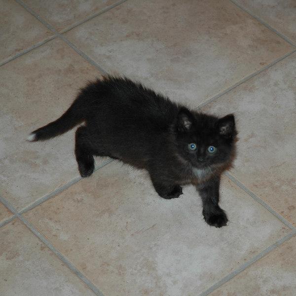 Bosko as a kitten