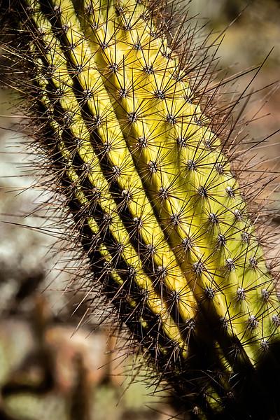 2017-10Oct-Tucson-205-Edit.jpg