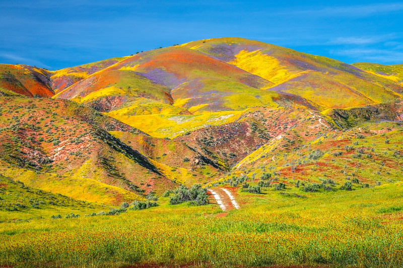 Carrizo Plain National Monument Wildflowers Superbloom Spring Symphony 31!  Elliot McGucken Fine Art Landscape Nature Photography Prints & Luxury Wall Art