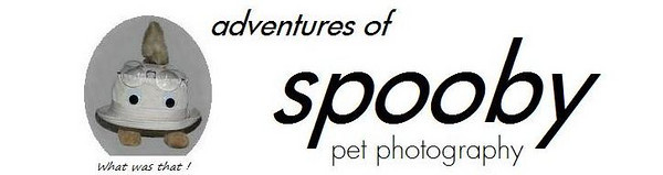 SPOOBY BANNERS
