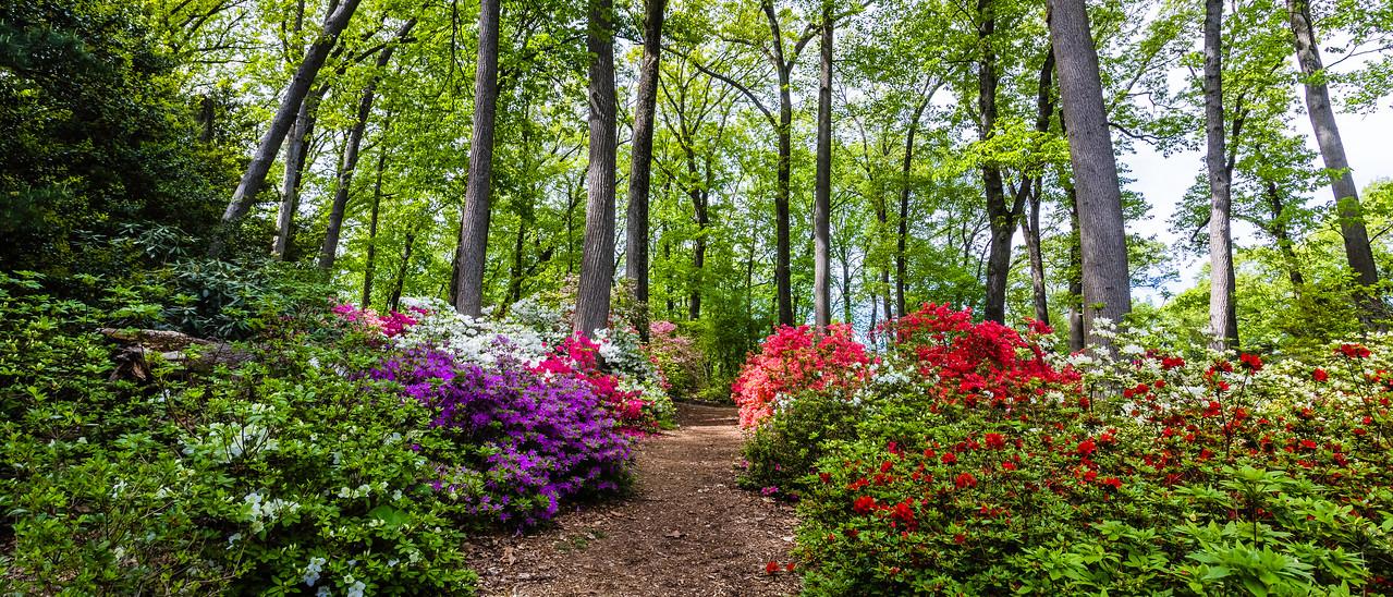 宾州詹金斯植物园(Jenkins Arboretum),花丛小道