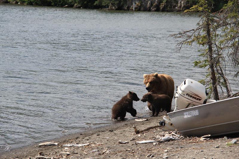 20160714-111 - Katmai NP-Brooks Camp-Mom and Two Cubs at Brooks Lake.JPG