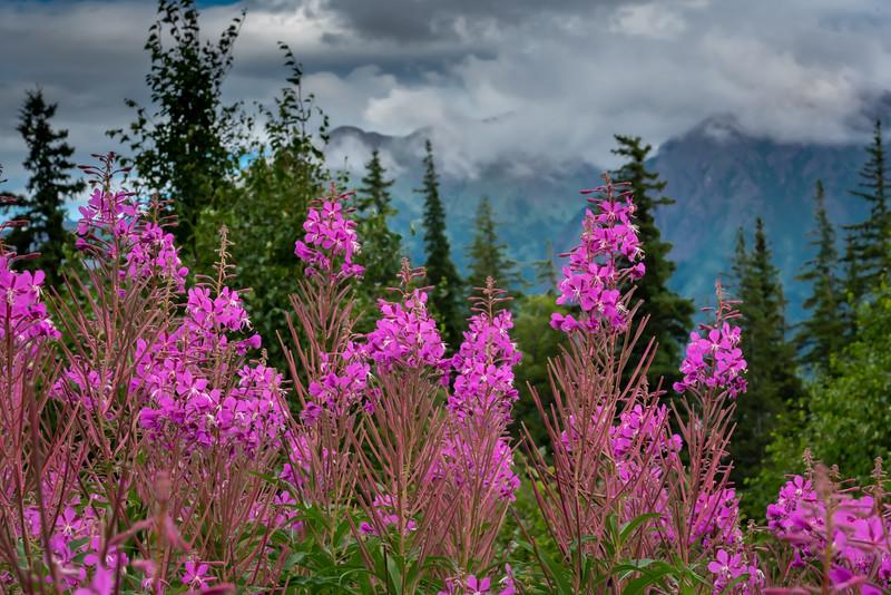 Alaska-1053-2.jpg