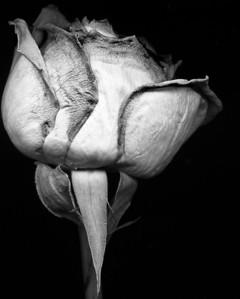 Scanned Black & White Images