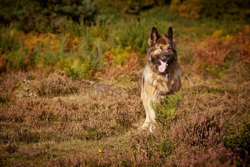 13_20161015_MH_Dogs.jpg