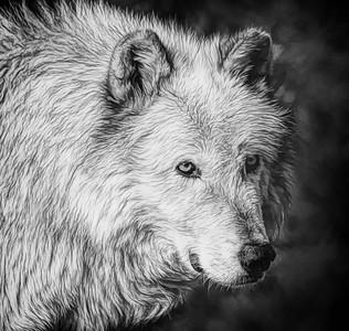 PRINT-MONO-MASTER-SILVER-GRAY WOLF-CAROL FELDHAUSER