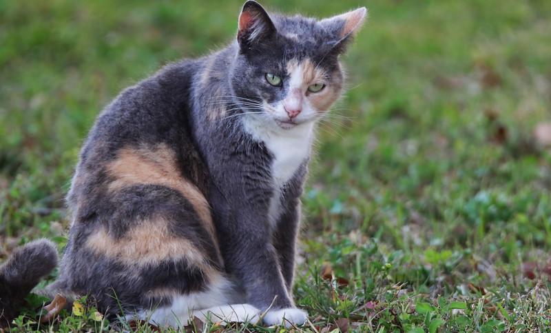 125_cat_3611_S.jpg