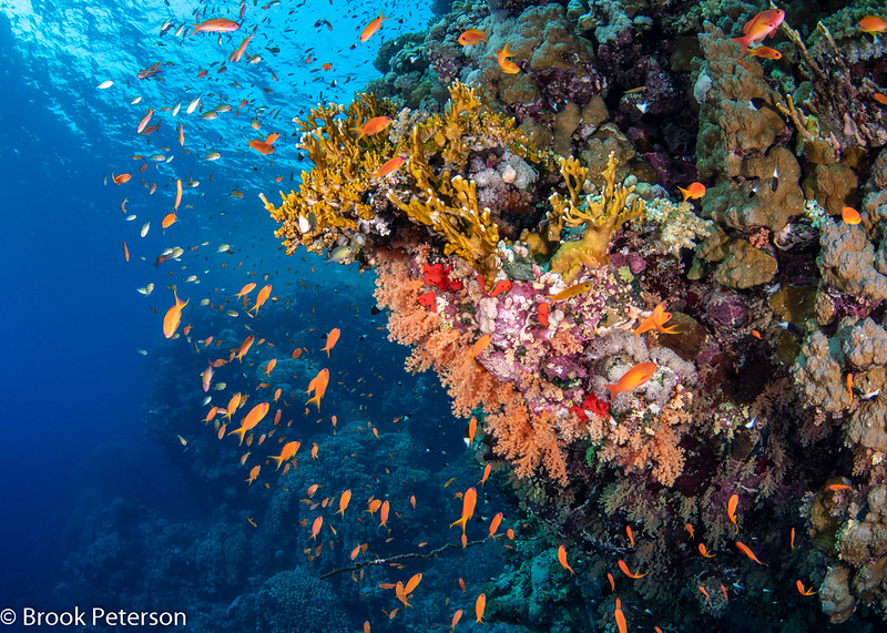 Fire Coral Reef