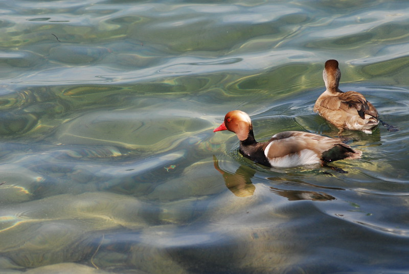 Lake Zurich_2497546084_o.jpg