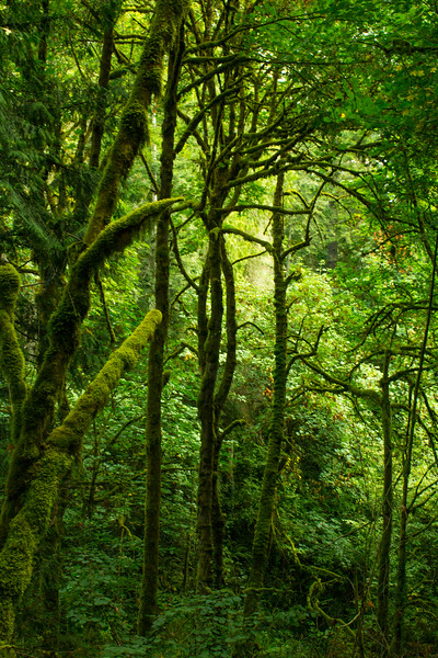 Forestscapes
