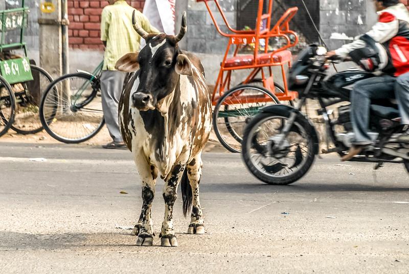 Delhi_1206_408.jpg