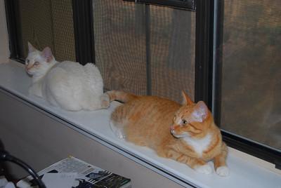 White Cat and Orange Cat