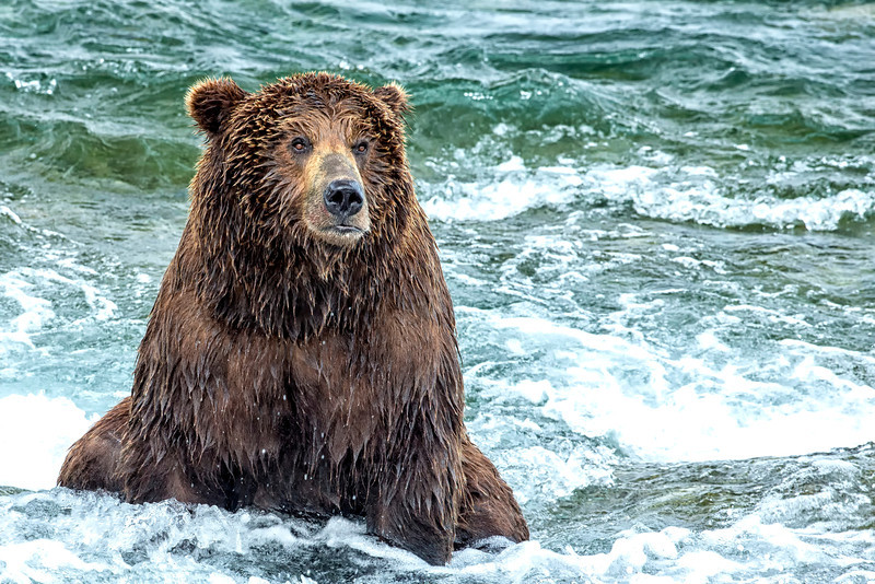Alaska_2013_FH0T8409.jpg
