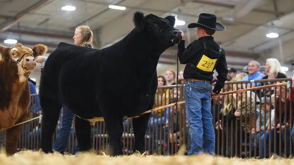 Jr Fed Market Steers