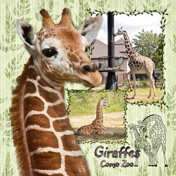 ComoZoo-Giraffes.jpg