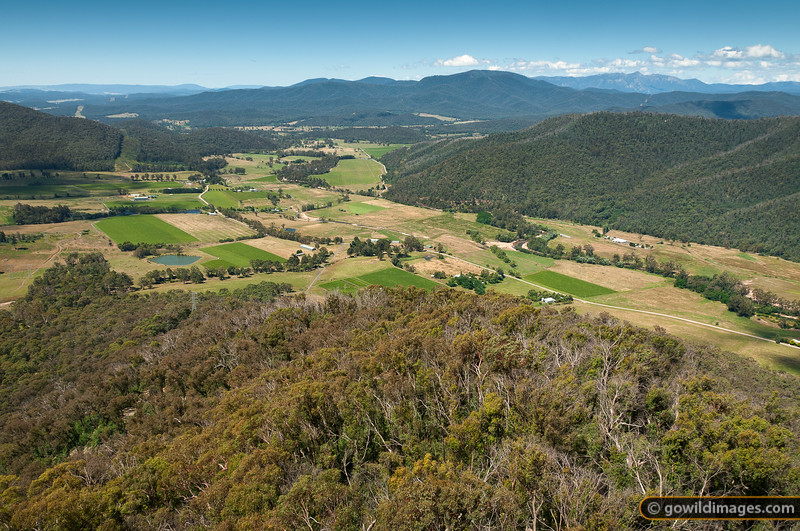 View to the north from Power's Lookout, Heyfield, King Valley. Mt Buffalo in the distance.