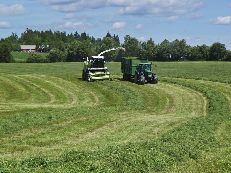 Grashøsting-34