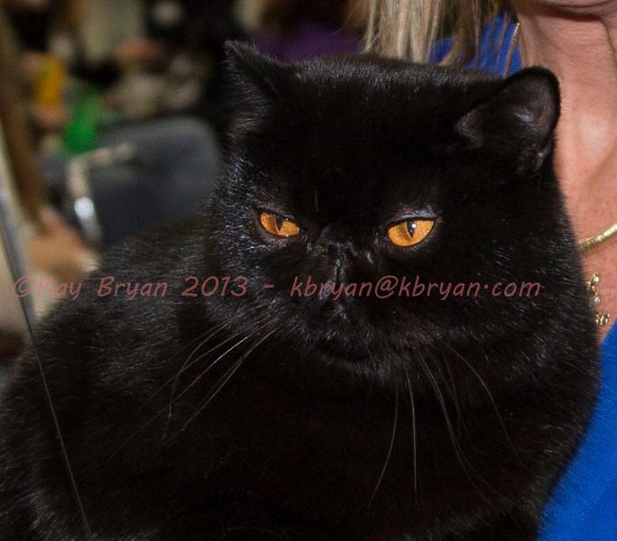 CatShow2014067.JPG