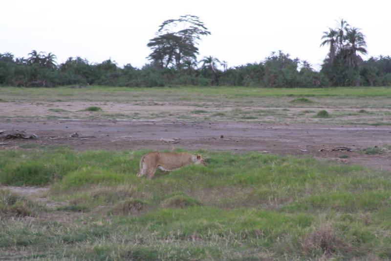 Kenya 2019 #2 1380.JPG