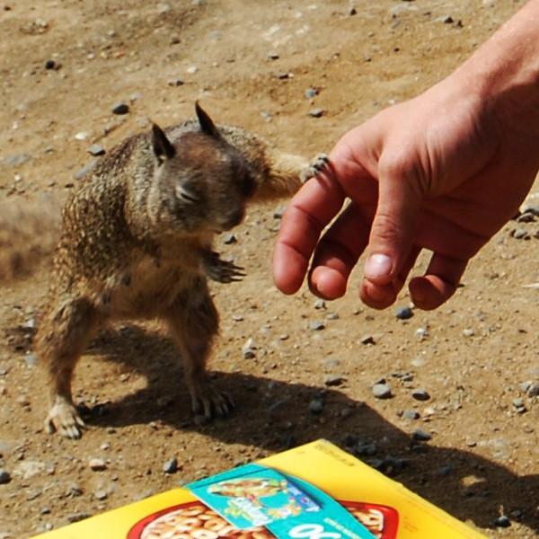 090324 Californian Trip Squirrel Hand out .jpg