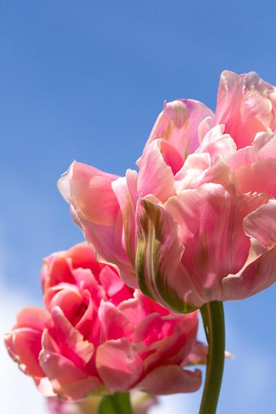 FineArt_Flowers_051520_0572.jpg