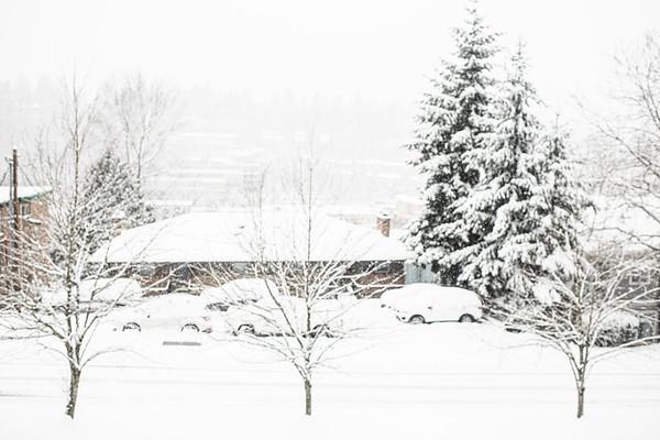 Snow Day on Mercer Island