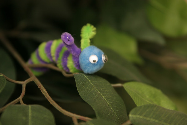 Morph: Caterpillars