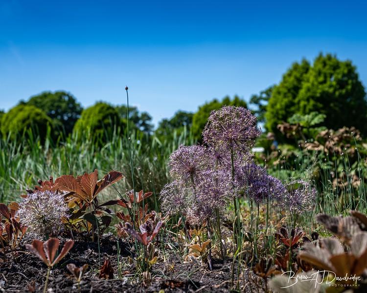Sussex Prairie Gardens Z6-3747.jpg