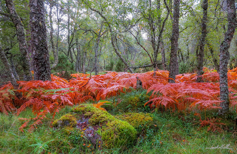 Color in the forest
