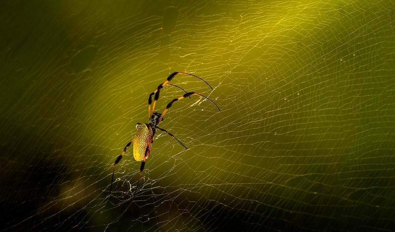Spiders-Arachnids-003.jpg