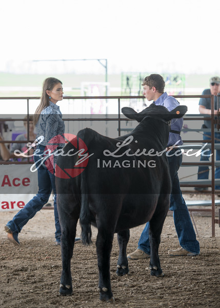Beauty and the Beast Showmanship Candids