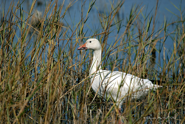 Florida Wild Birds & Wildlife
