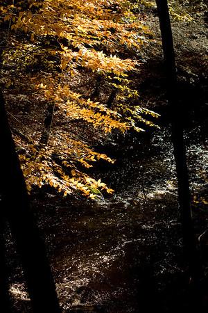 Mianus Gorge Preserve
