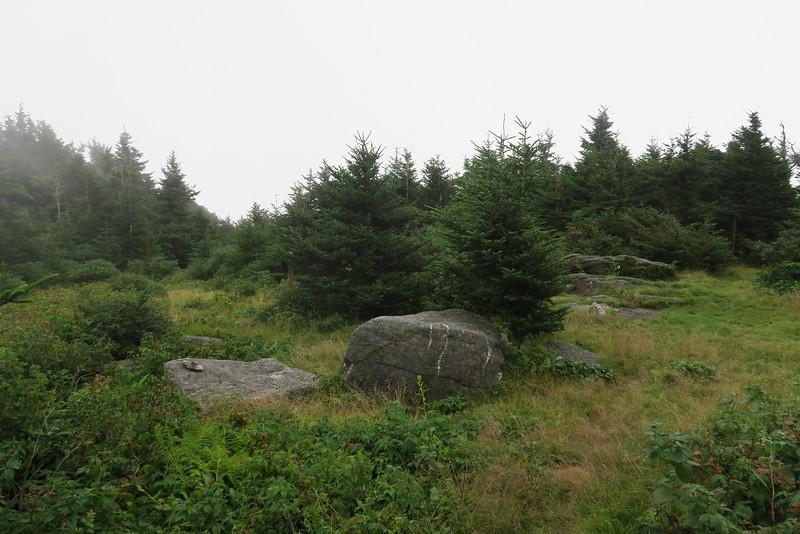 Alpine Meadow Campsite -- 5,740'