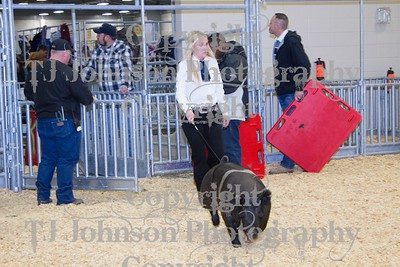 2014 KISD Livestock Show Swine Class 3