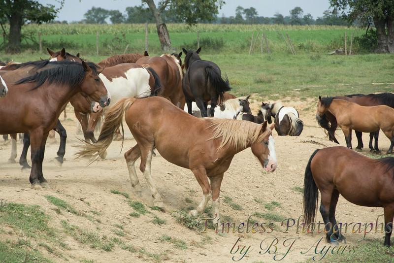 2014_Horses_Woodstown_10.jpg